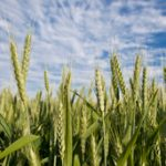 Profitable integration of cropping and livestock – key principles