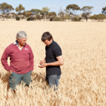 Grain marketing – opportunity to work with next generation